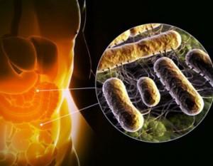 Фото: Микрофлора кишечника