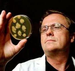 Анализ кала на дисбактериоз расшифровка
