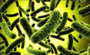 Фото: бактерии